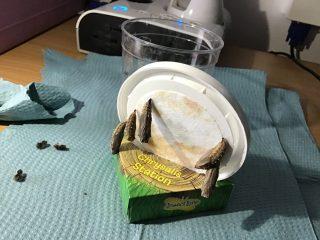 Caterpillars4